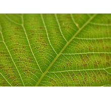 Leaf Patterns Photographic Print