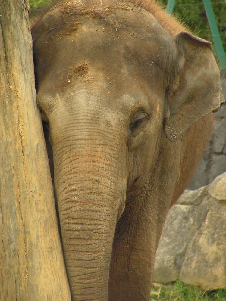 Elephant by jillandian