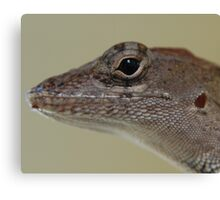 lizard up close Canvas Print