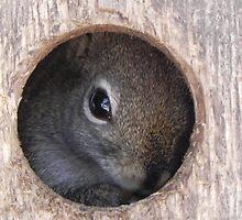 Peek-A-Boo, Eye See You by Martha Medford
