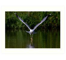 Seagull walks on water Art Print