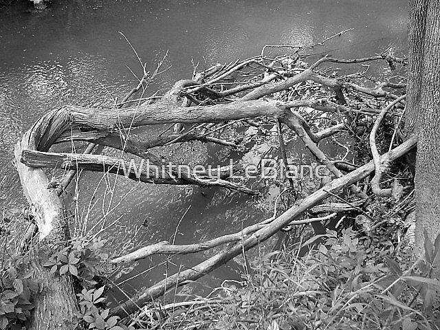 fallen branch by Whitney LeBlanc