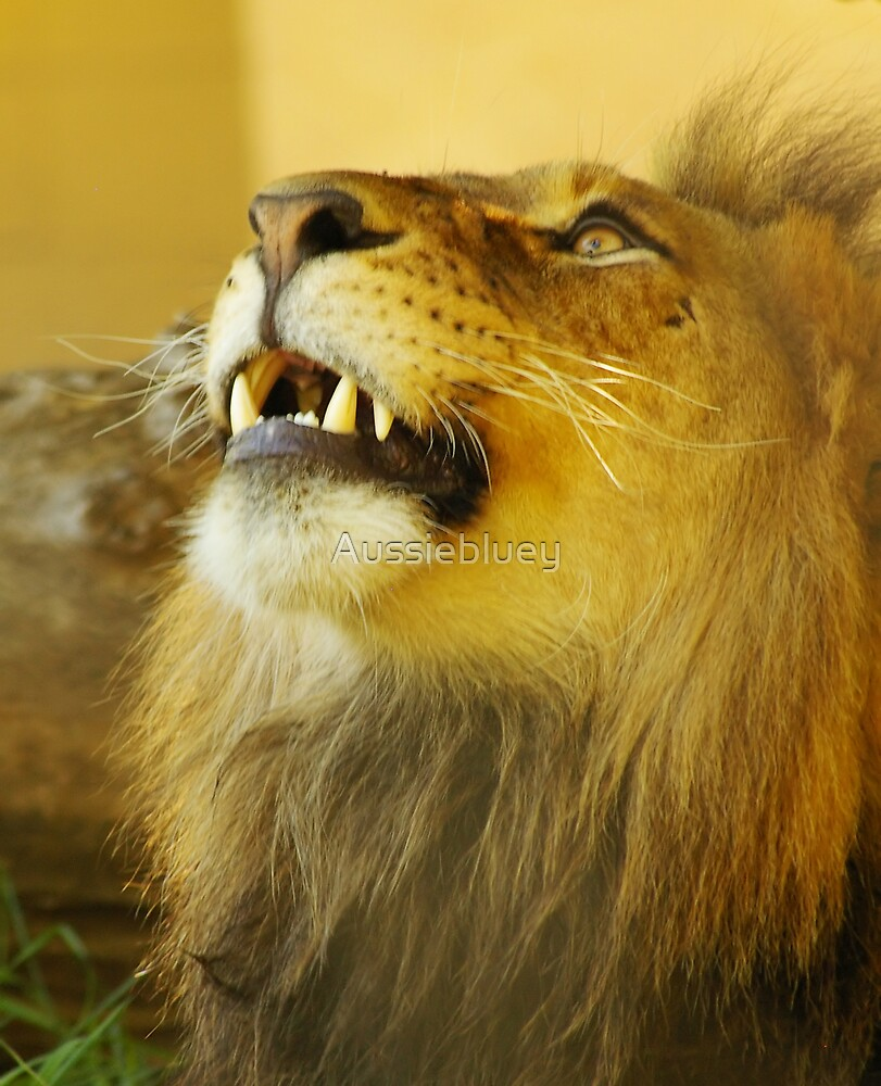 Lion by Aussiebluey