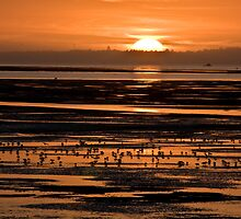 Humboldt Bay Sunset by Adam Mattel