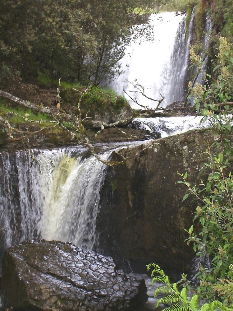 """""""crocodile head rock"""" at Guide Falls, Ridgley, Tasmania by gaylene"""