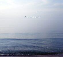 birds flying over the sea by Olja Merker