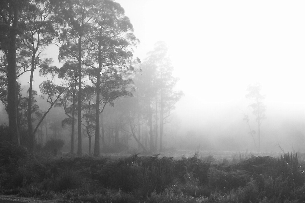 foggy mood   -  I adore fog (very atmospheric) by gaylene