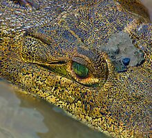 Crocodile. Palo Verde National Park, Guanacaste, Costa Rica by Eyal Nahmias