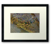 Crocodile. Palo Verde National Park, Guanacaste, Costa Rica Framed Print