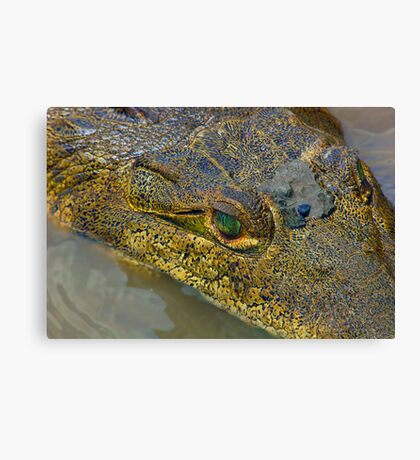 Crocodile. Palo Verde National Park, Guanacaste, Costa Rica Canvas Print
