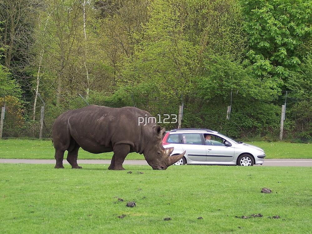 Rhino by pjm123