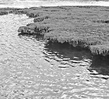 Sea Shelf by randmphotos