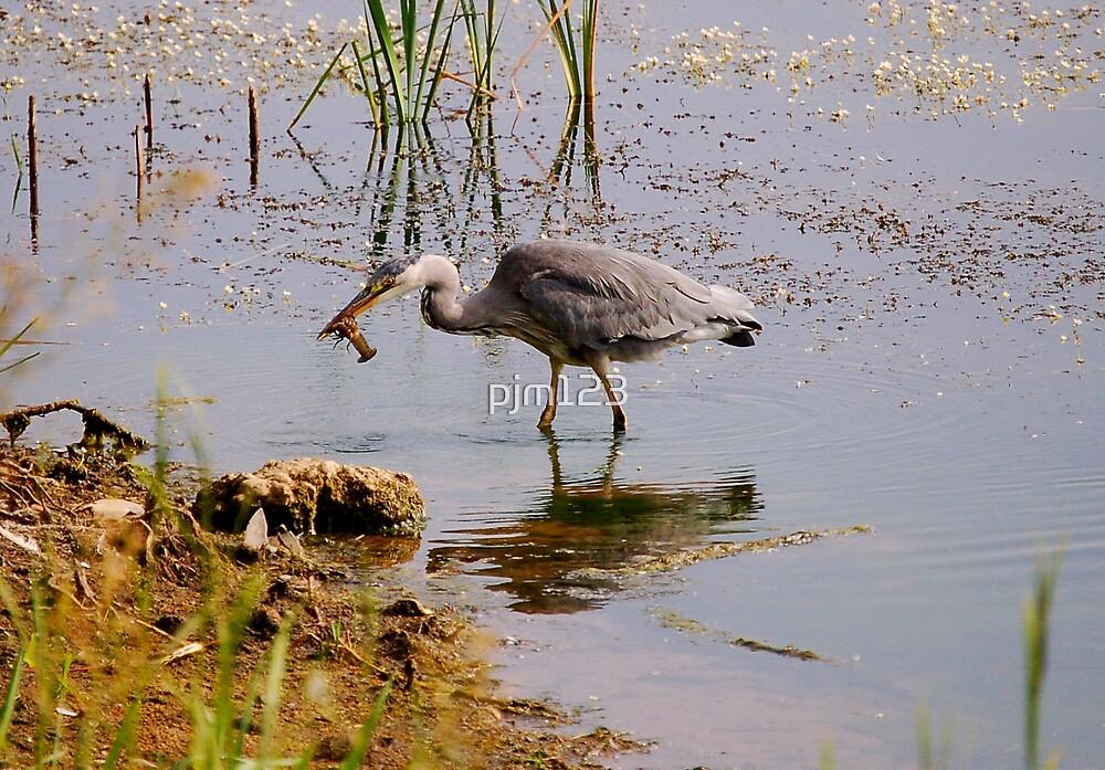 Grey Heron by pjm123