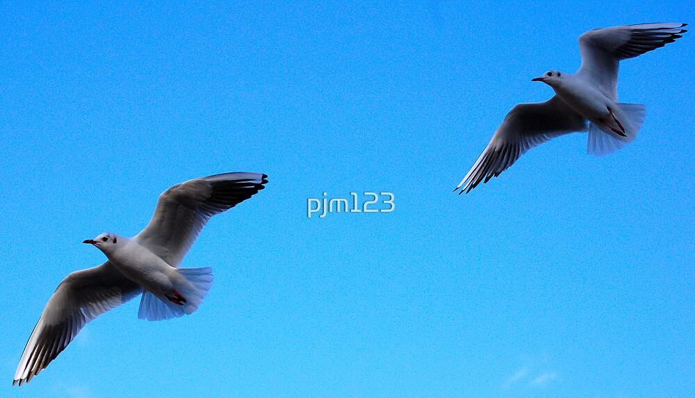 Gulls by pjm123