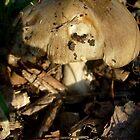 Mushrooms in the autumn sun by Ana Belaj