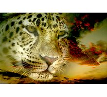 Leopard ~ A Coolaboration Photographic Print