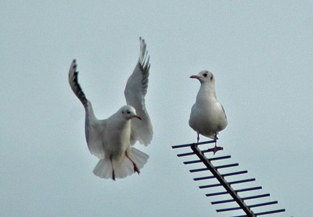 Gulls by Catherine Brock