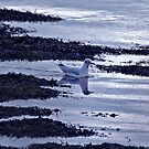 Gull on water by Catherine Brock