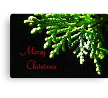Christmas Fir Canvas Print