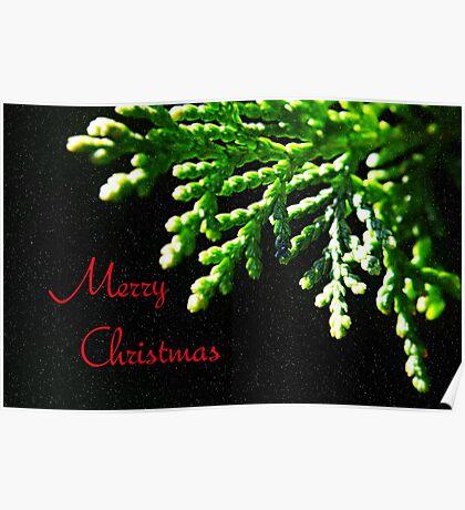 Christmas Fir Poster