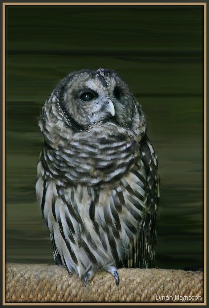 Owl by Dinah Hampton