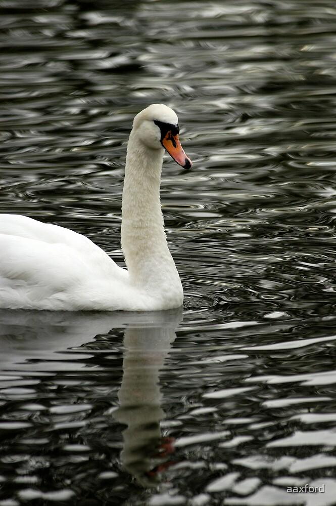 Swan Lake by aaxford