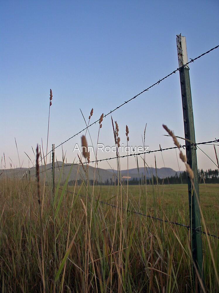 Fields of Grace by Ann Rodriquez
