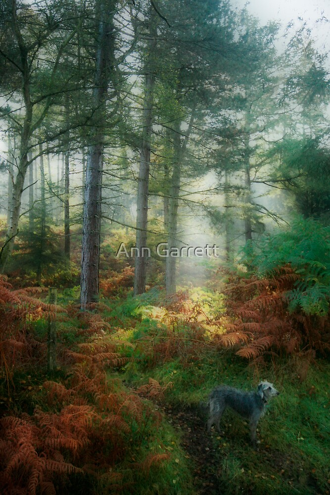 Lurcher in the Forest by Ann Garrett