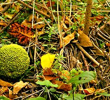 Hedge Apple on Forest Floor by MegaPixel