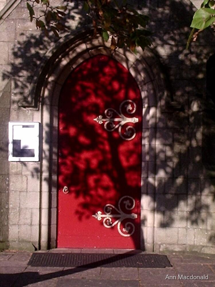 Branch shadows by Ann Macdonald