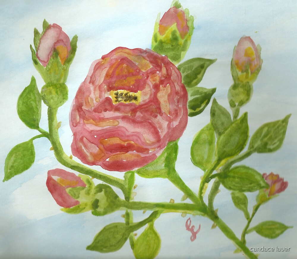 """a wild red rose """"girls rooms""""  by candace lauer"""