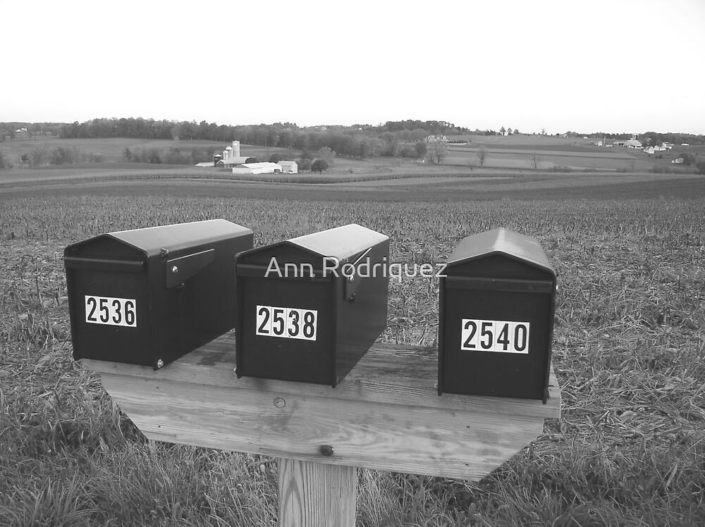 You've Got Mail! by Ann Rodriquez