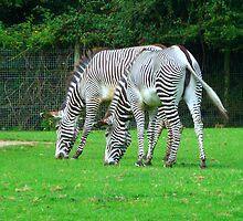 A striped pair by Sharon Perrett