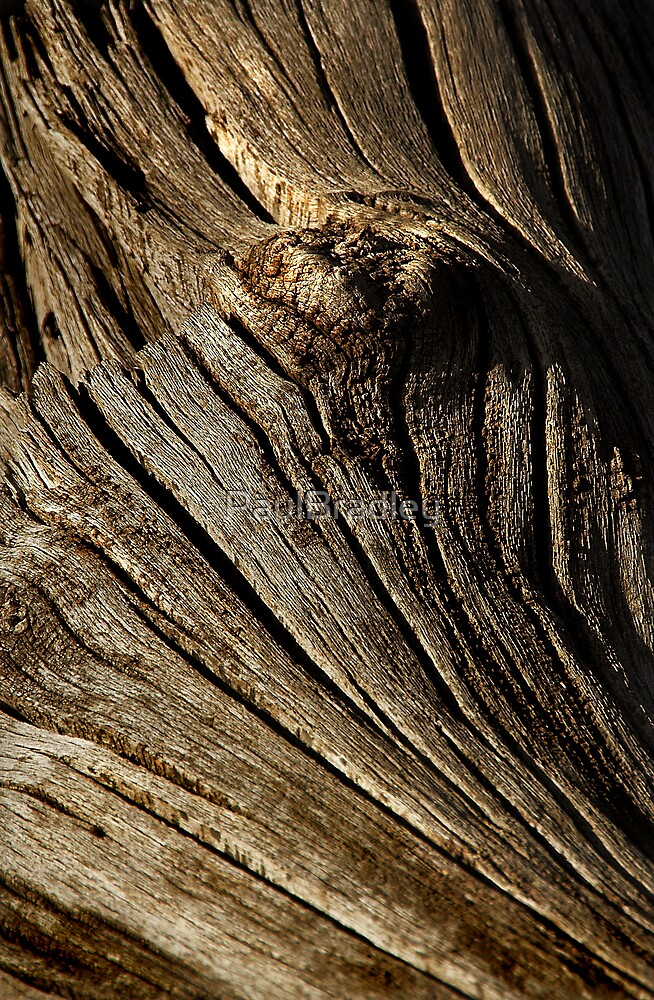 Wood by PaulBradley