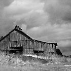 tabacco barn  by Sharon  Taylor