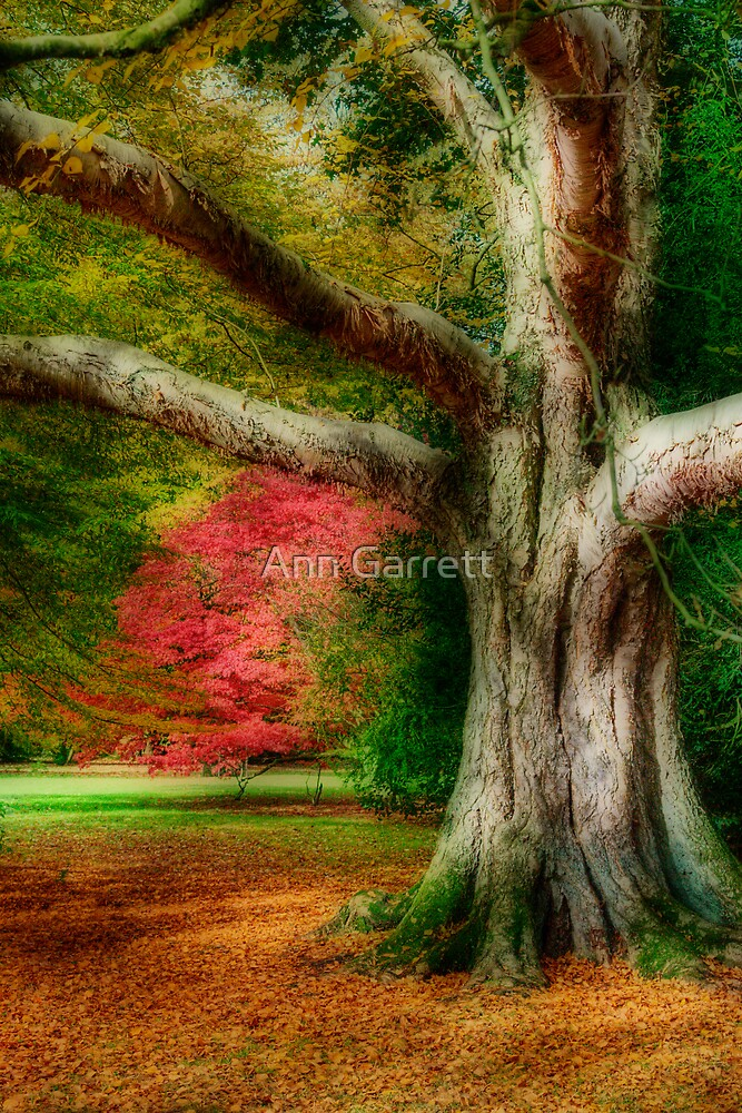 Autumn Tree by Ann Garrett