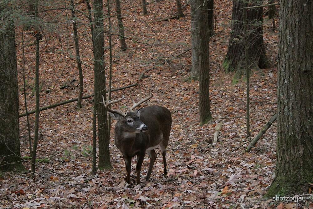 Whitetail Buck ... Ten pointer! by shotzbyjay