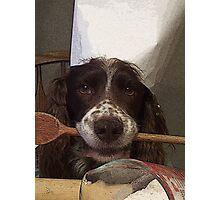 Chef Dog Photographic Print
