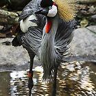Pretty Bird! by Heather Friedman