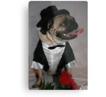 All Dressed Up And Nowhere To Go! Metal Print