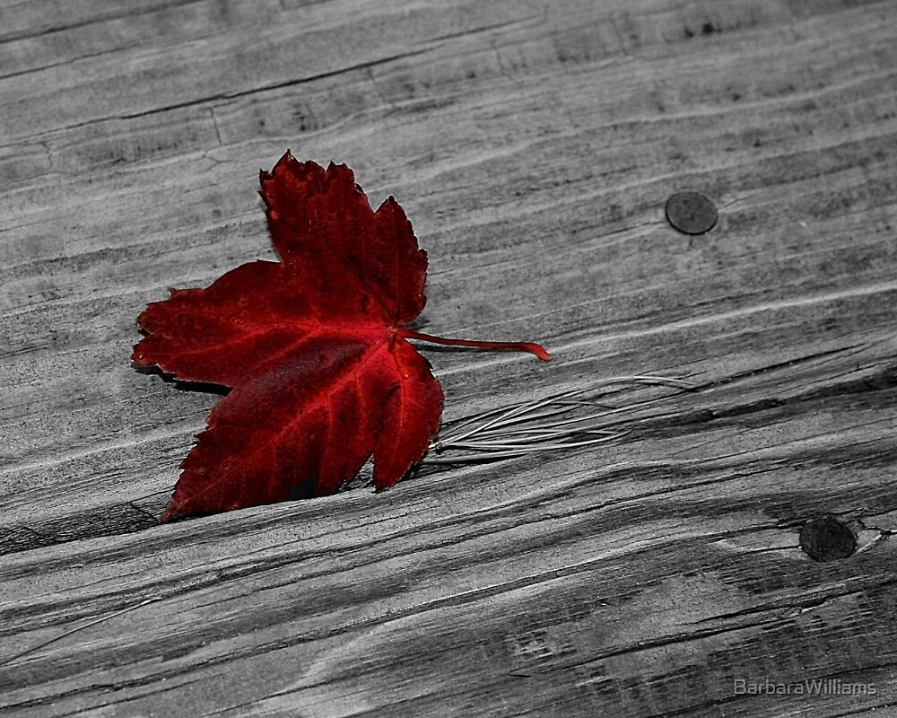 Maple Leaf by BarbaraWilliams
