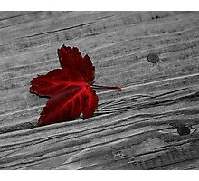 Maple Leaf Photographic Print