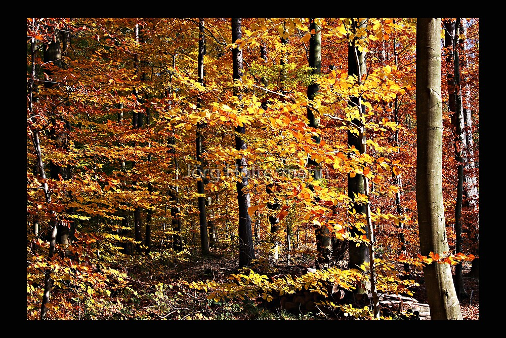Golden October by Jörg Holtermann