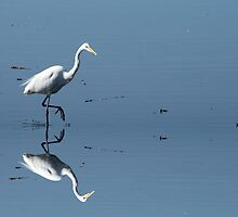 Great Egret by Kimberly Palmer