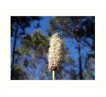 Australian native plant Art Print