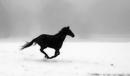 Freedom by Pal Gyomai