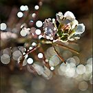 Wild Flower by dedakota