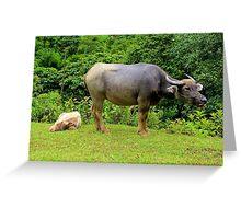 A Calf and his Mother - Sa pa, Vietnam. Greeting Card