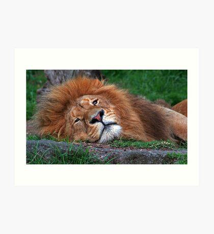 Laid Back Lion Art Print