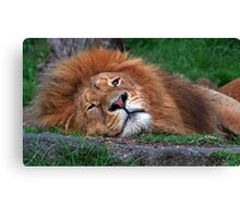 Laid Back Lion Canvas Print